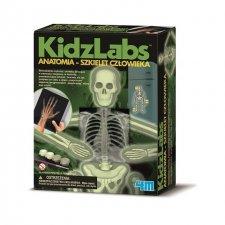 Hra: Human skeleton -  Svietiaca ľudská kostra