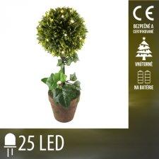 Vianočná LED svetelná ozdoba vnútorná - na batérie - krušpán - 25 LED - Teplá biela